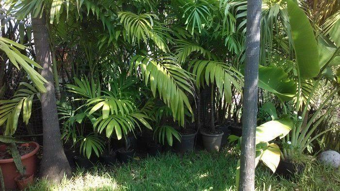 Palmiers et autres plantes diverses