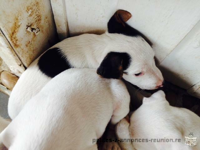 site de rencontre coquine gratuite rencontre chien adulte chiot