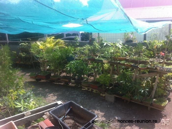 bonsaïs et plantes diverses